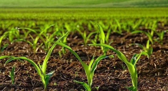 رویدادی برای تسریع انتقال فناوری های نوآورانه به بخش کشاورزی