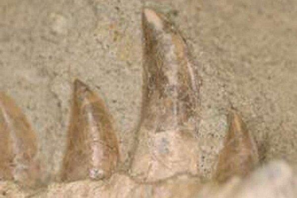 کشف دایناسور گوشتخوار با قابلیت تعویض دندان