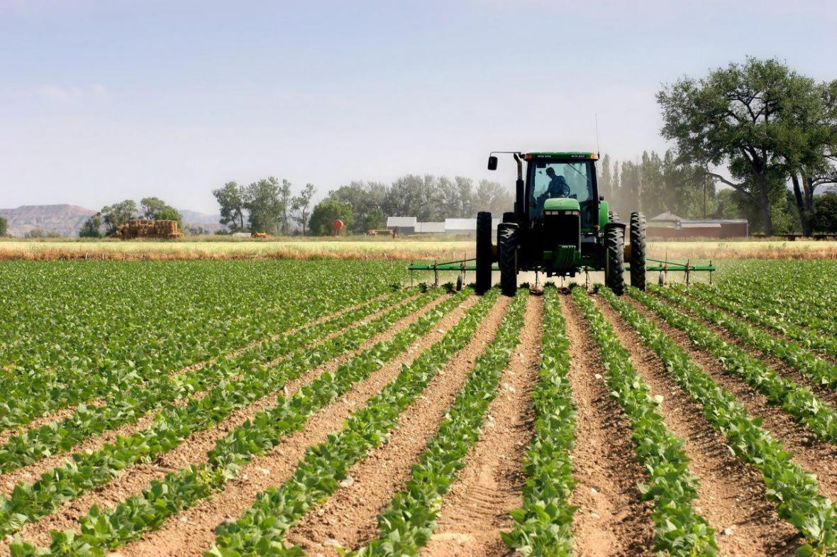 برداشت 430 هکتار عدس از سطح مزارع دیم چرداول