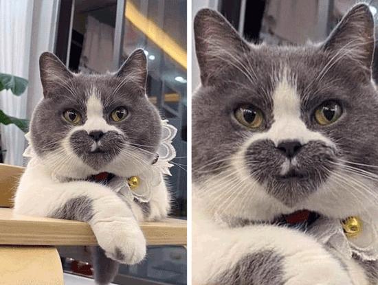 تصاویری جالب از گربه هایی با ویژگی های شگفت انگیز